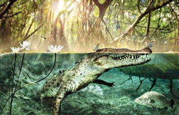 Crocodylus checchiai