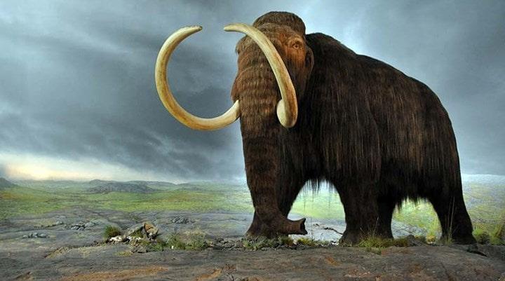 mamut evrimi nasıl oldu