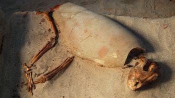 Berenice'de gömülü bir köpek