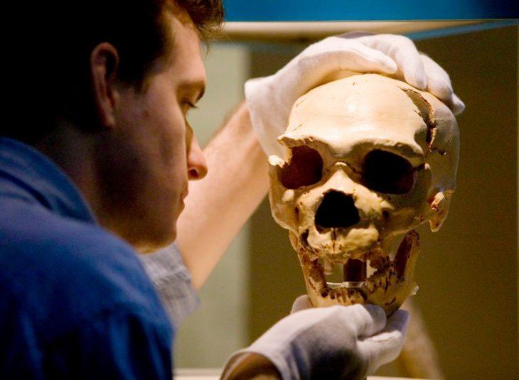 Neandertal beyinleriyle ilgili araştırma