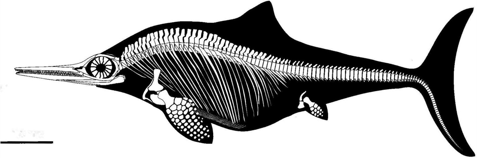 İktiyozor fosili