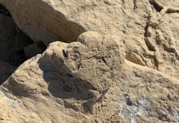 Dünyanın en küçük stegosaurus fosil izi
