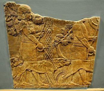 Eskiçağ toplumlarında köpek şifa için kullanılıyordu.