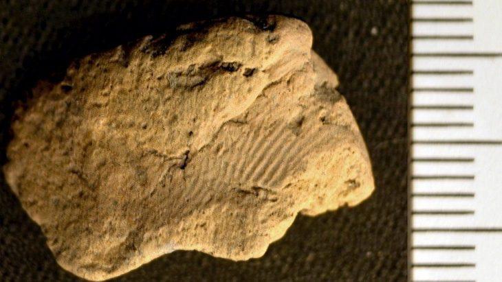 Orkney'de bulunan 5.000 yıllık çömlek üzerinde parmak izi