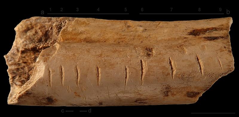 Bir Neandertal tarafından sırtlan kemiğine yapılan işaretler