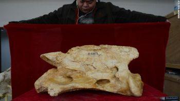 Linxia Dev Gergedanı fosili