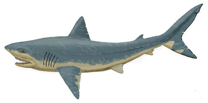 Squalicoraks köpekbalığı