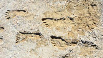 Amerika kıtasında 23.000 yıllık fosilleşmiş ayak izleri