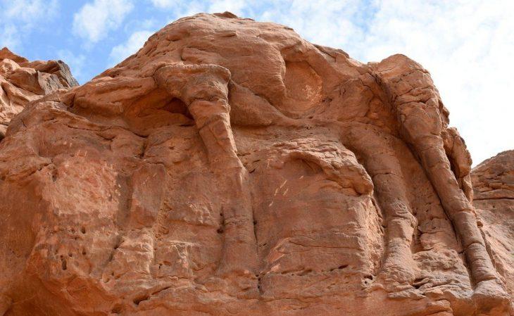 Suudi Arabistan'daki deve oymaları