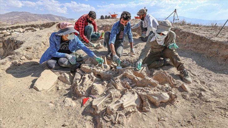 Urartulunun mezarında at, sığır, koyun iskeletleri bulundu. Foto AA